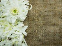 Blume auf Sackrahmenhintergrund Stockbilder