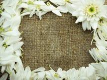 Blume auf Sackrahmenhintergrund Lizenzfreies Stockbild