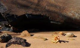 Blume auf sandigem Strand Lizenzfreie Stockfotografie