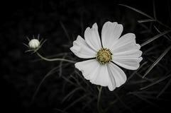 Blume auf schwarzem Blumendesign Stockbild
