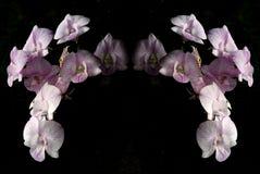 Blume auf schwarzem Hintergrund Stockfoto