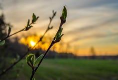 Blume auf Sonnenunterganghintergrund Stockfoto