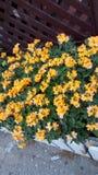 Blume auf steet lizenzfreie stockbilder