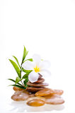 Blume auf Stein des gelben Flusses Lizenzfreie Stockfotografie