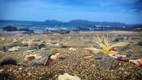 Blume auf Strand Lizenzfreies Stockbild