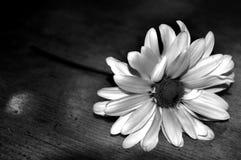 Blume auf Tabelle Stockbild
