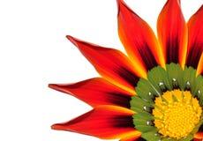 Blume auf Weiß Stockfoto