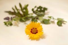 Blume auf Weiß Stockbild