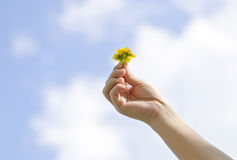 Blume auf weiblicher Hand lizenzfreies stockfoto