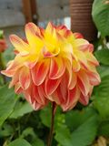 Blume aus DEM Garten stock foto's