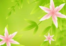 Blume backgorund Lizenzfreie Stockfotografie