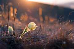 Blume bei Sonnenuntergang lizenzfreie stockbilder