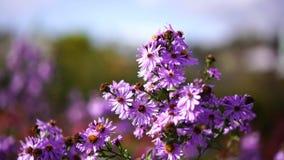 Blume bewegt sich in den Wind stock footage