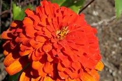 Blume binar getroffen lizenzfreies stockbild