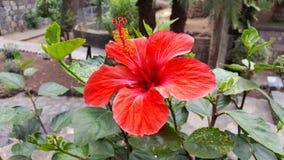 Blume Blume Teneriffa Stockfotos