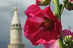 Blume in Bolgar, Tatarstan, Russland, Minarett Lizenzfreie Stockfotografie