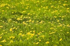Blume deckte Wiese ab Lizenzfreies Stockfoto