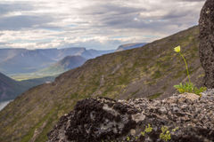 Blume in den Bergen Stockfotografie