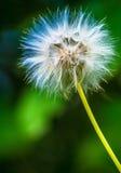 Blume in den Farben Lizenzfreie Stockfotografie