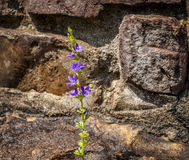 Blume in den Felsen Lizenzfreie Stockfotografie