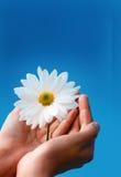 Blume in den Händen lizenzfreies stockbild
