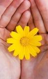 Blume in den Händen Stockbild
