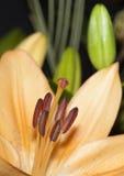 Blume in der Blüte lizenzfreie stockfotos