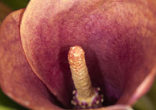 Blume in der Blüte stockfoto