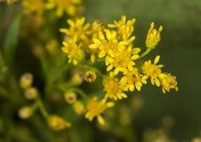 Blume in der Blüte lizenzfreie stockfotografie