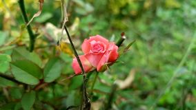 Blume in der Blüte Stockbild