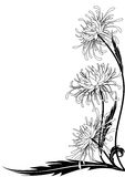 Blume der Chrysantheme vektor abbildung
