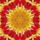 Blume der Dahlie Lizenzfreie Stockfotos