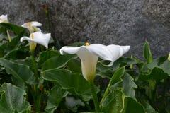 Blume an der Desa-Molkerei Stockbild