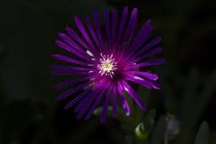 Blume in der Dunkelheit lizenzfreie stockfotografie