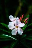 Blume in der Erde Lizenzfreie Stockfotos