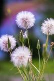 Blume in der Farbe Lizenzfreie Stockfotos