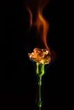 Blume in der Flamme Lizenzfreie Stockfotos