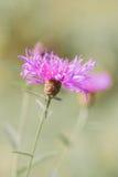 Blume in der frühen Sonne Stockfotos