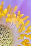 Blume in der Fruchtsüßigkeit Stockbild
