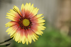 Blume der Geschichte Stockfotografie
