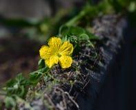 Blume an der Grenze Stockfotos