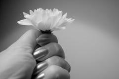 Blume in der Hand Lizenzfreies Stockbild