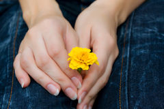 Blume in der Hand Lizenzfreies Stockfoto