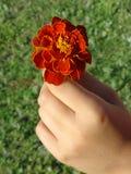 Blume in der Hand des Kindes stockfotos