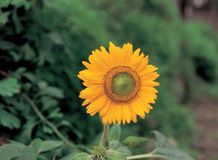 Blume an der Natur lizenzfreie stockfotos