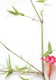 Blume der rosa Wüstenrose-oder Impala-Lilie oder der Spott-Azalee Lizenzfreie Stockfotos