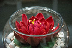 Blume in der Schüssel Lizenzfreie Stockfotografie