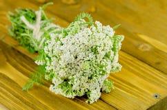 Blume der Schafgarbe oder Achillea-millefolium auf einem Holztisch Stockfotos
