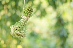Blume der Schafgarbe oder Achillea-millefolium auf einem Holztisch Lizenzfreies Stockfoto
