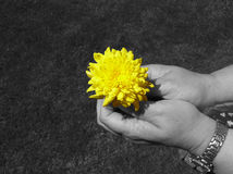 Blume in der Schwärzung stockfotos